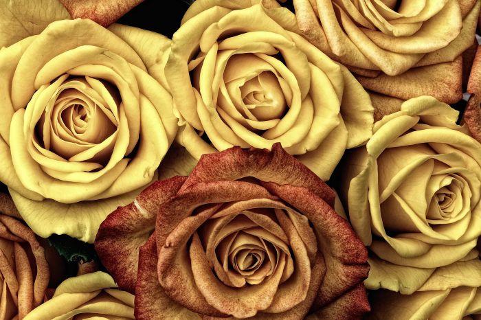 Kiek sena yra floristikos istorija?