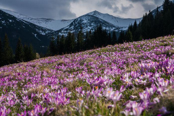 12 įdomių faktų iš gėlių pasaulio