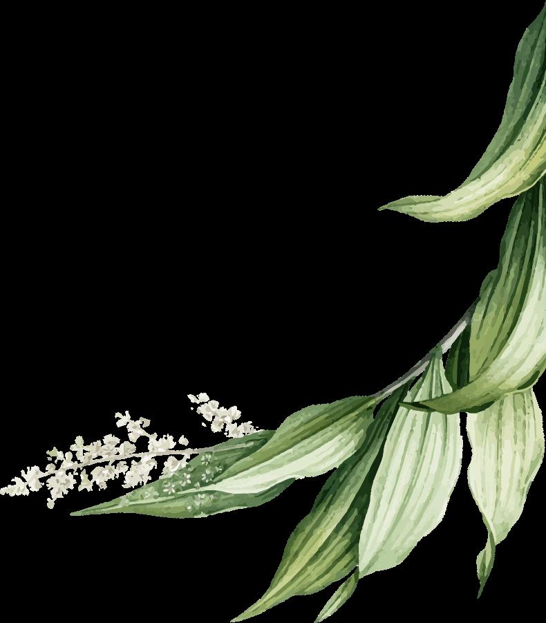 Florus lapai