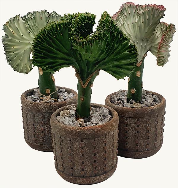 Florus vazoniniai augalai